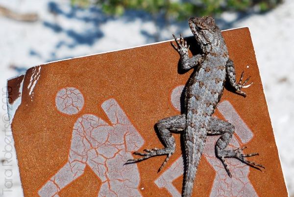 Lizard hiker