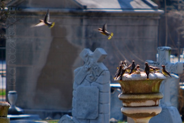 birds playing in a cemetery urn