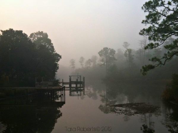 foggy bayou