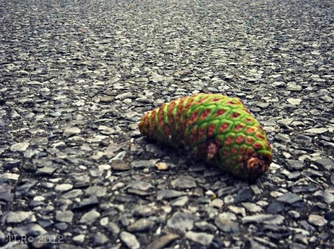 green pinecone on black asphalt