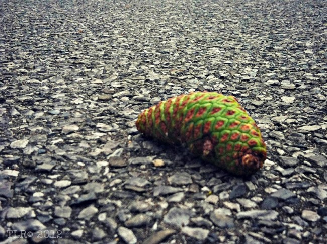 green pinecone on black asphalt