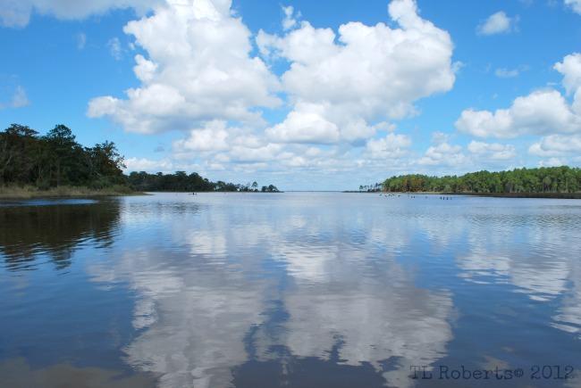 Eden Gardens bayou skies