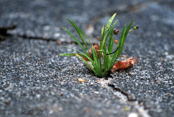 grass in sidewalk crack