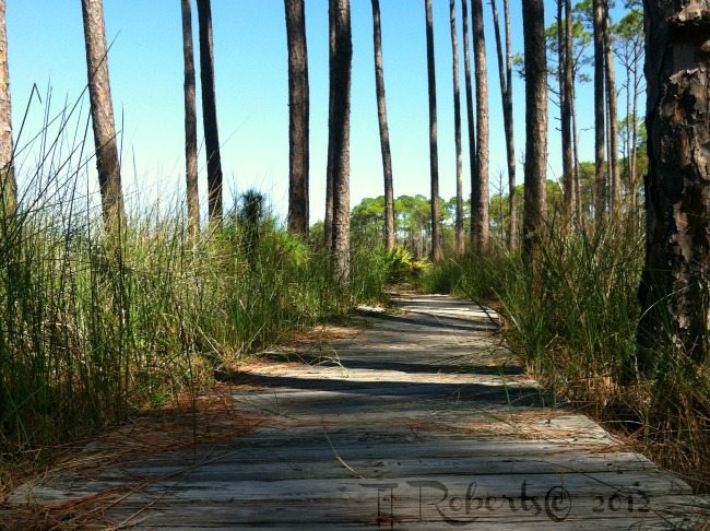 Turpentine boardwalk