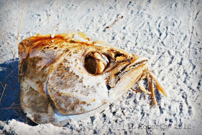 fishhead