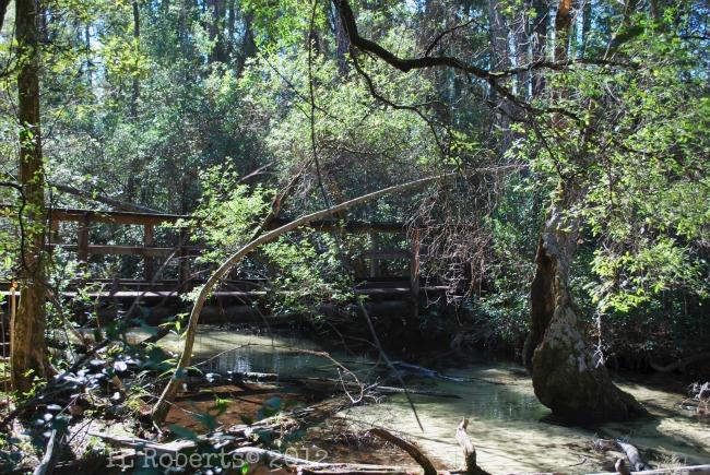 forestbridge