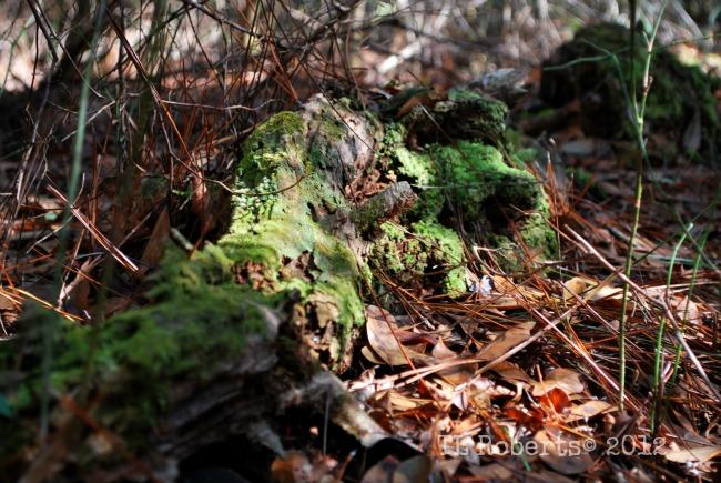 forestcarpet