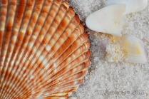 orange striped shell