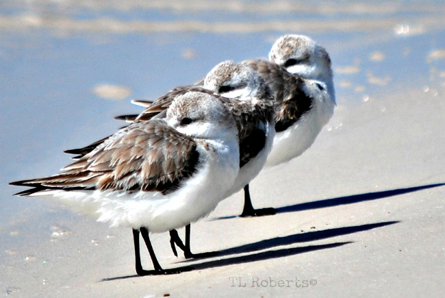 three seagulls