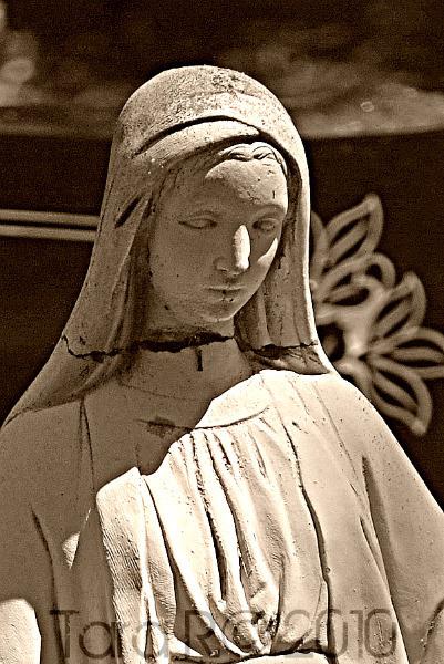 angel madonna