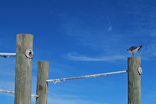 pillars and seagulls
