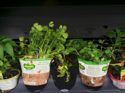 starterplants
