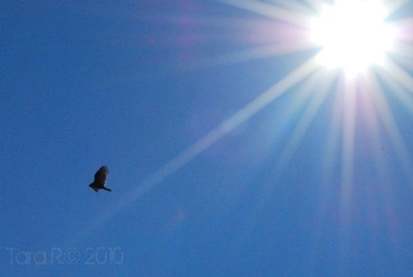 seagull sunflare