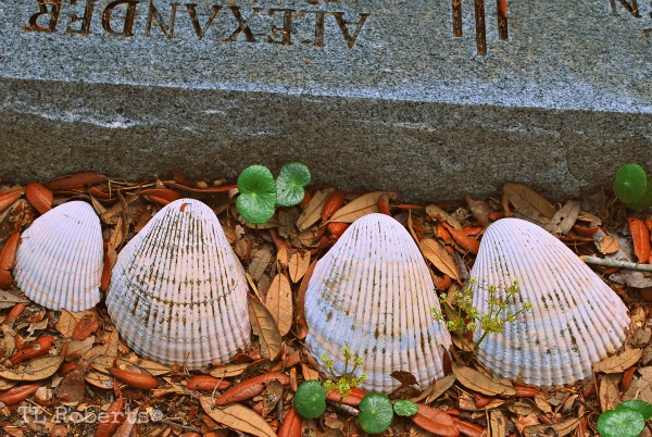 oyster shells on graves