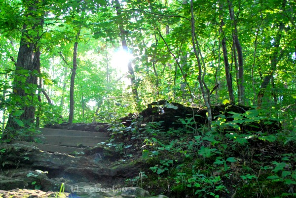 sunlight shining through trees
