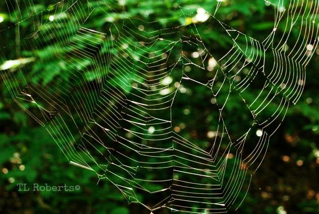 spiderwebs