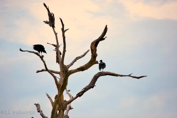birds in dead tree
