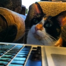 cat and keyboard