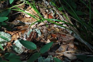 plaguefrog