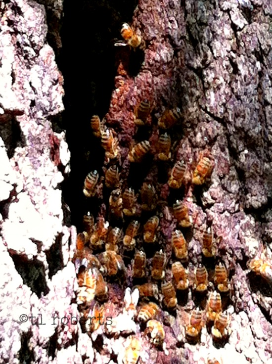 tree trunk bee hive