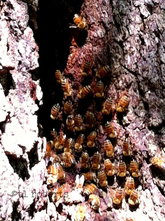 tree trunk bee hive