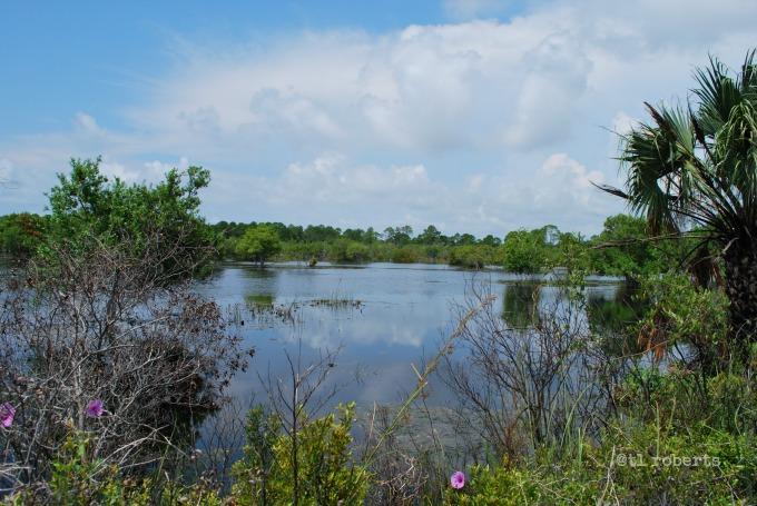 St. Andrew's Gator Lake
