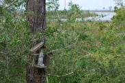woodlandsaint