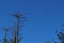 moonmorning