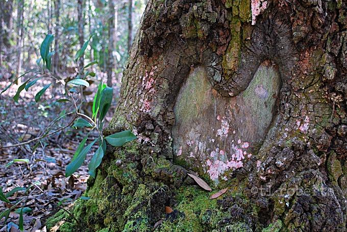 Mother Earth lovesyou