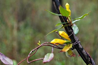 phoenixflowers