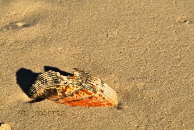 broken shell on beach