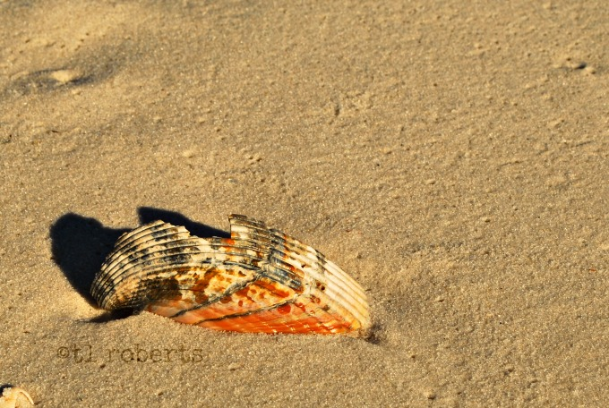 broken shell on beach