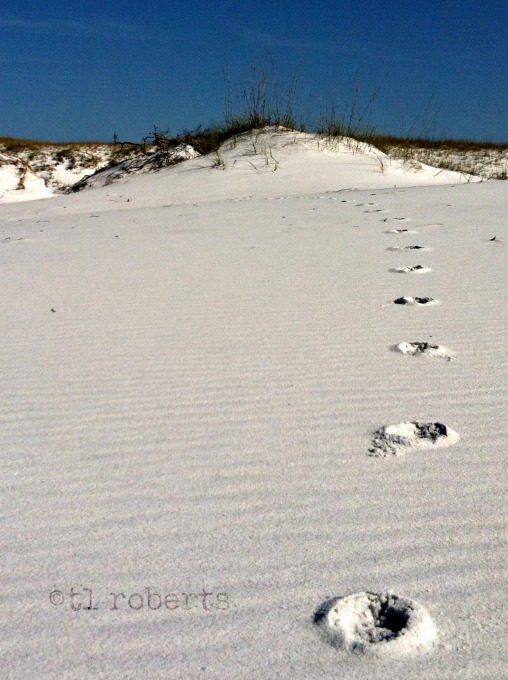 trail in the sand