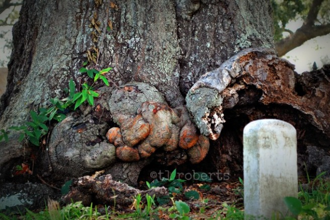 small grave maker under old tree