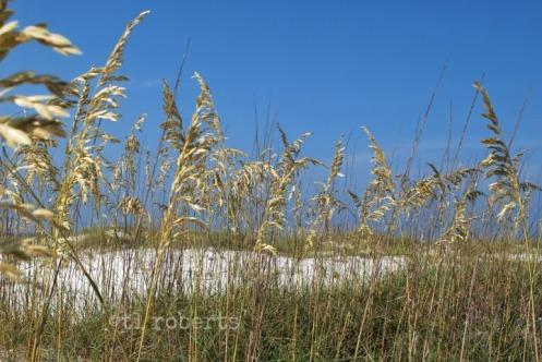 seagrass14