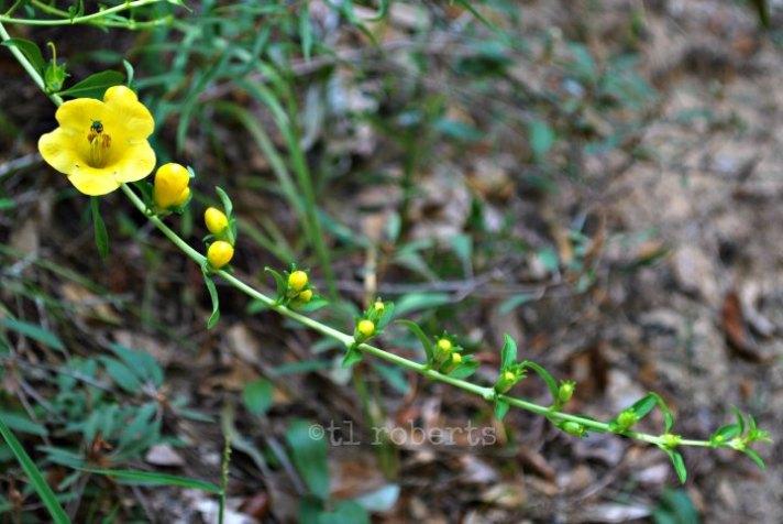 yellowgarland