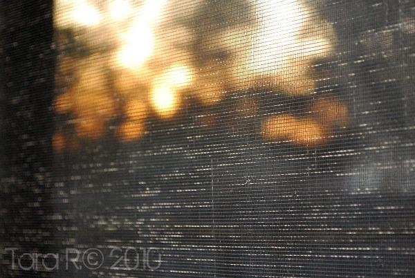 sunset reflection through window screen