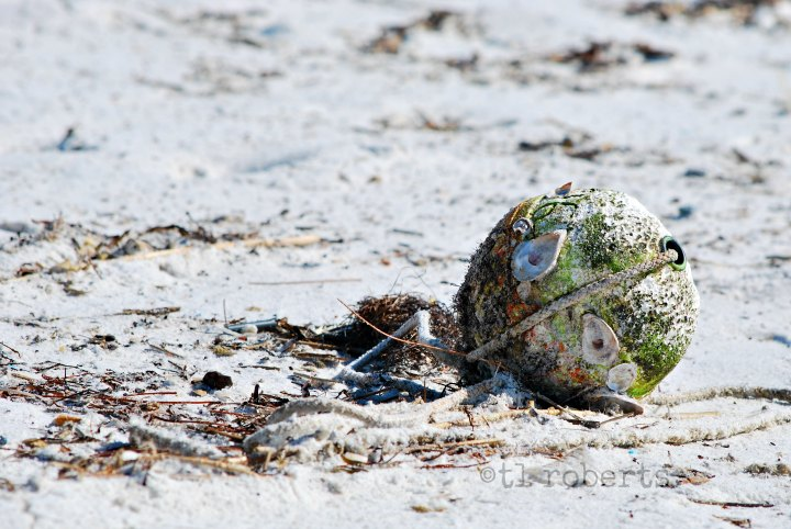 barnacle crusted buoy