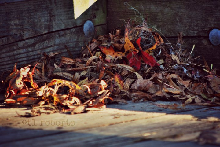 pile of dead leaves