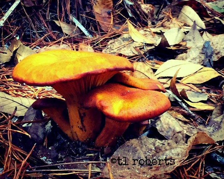 orange and brown mushroom