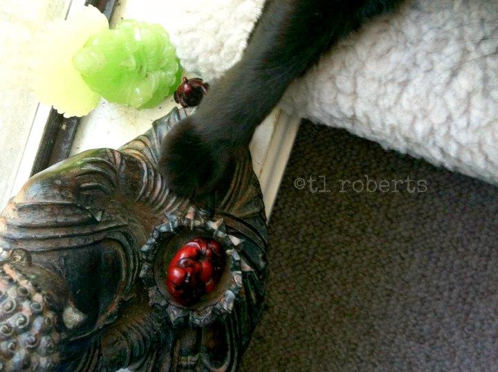 cat paw on Buddha