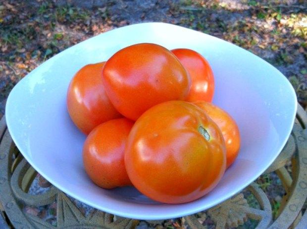 Bowl of homegrown tomatos