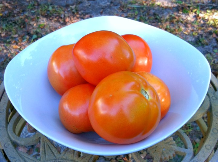 Bowl of homegrown tomatos