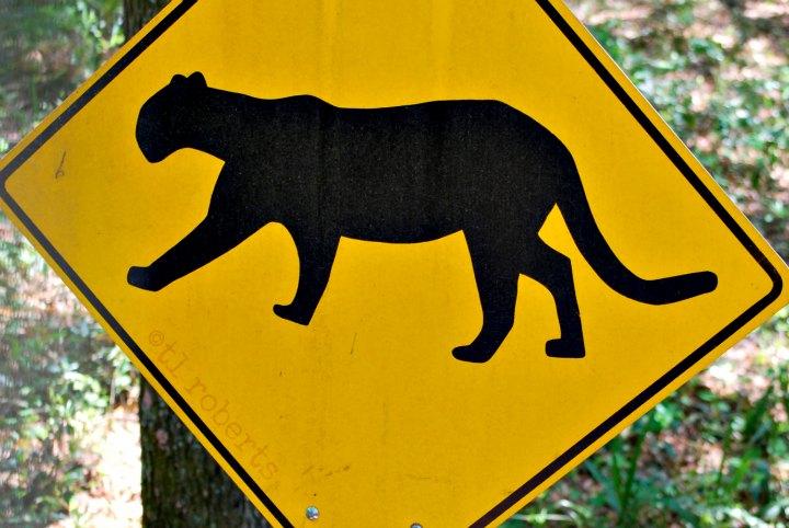 Warning: Wildlife