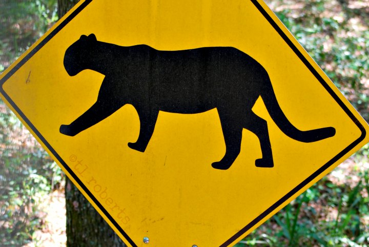 Cougar crossing sign
