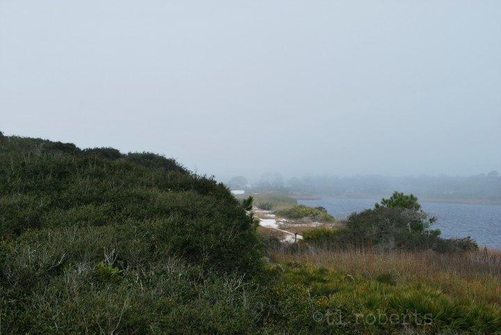 foggy hill