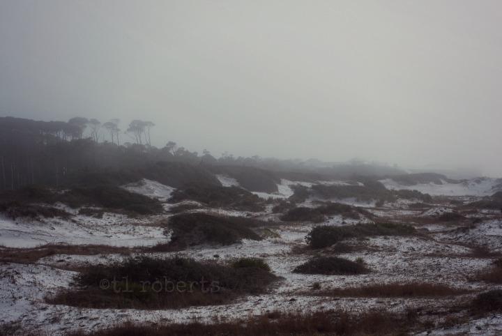 foggy beach landscape