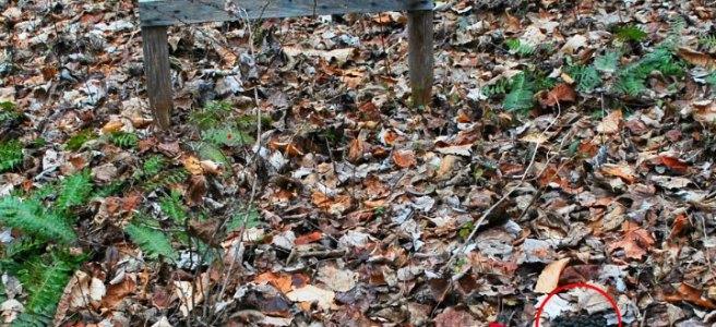 deer pellets, hunting target