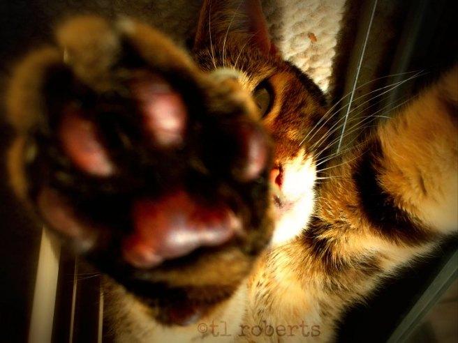 cat paw macro