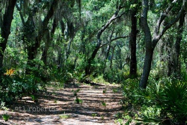 dirt trail in shadows